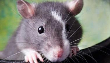Nueva ley les evitará a miles de animales la agonía de crueles pruebas de químicos