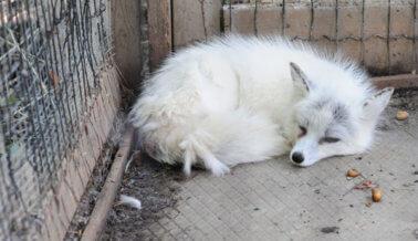 Furla: Ningún Llavero, ni Bolso de Pelaje, Vale la Vida de un Animal