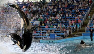 Lo que esta veterinaria vio en el SeaWorld de San Antonio te atormentará