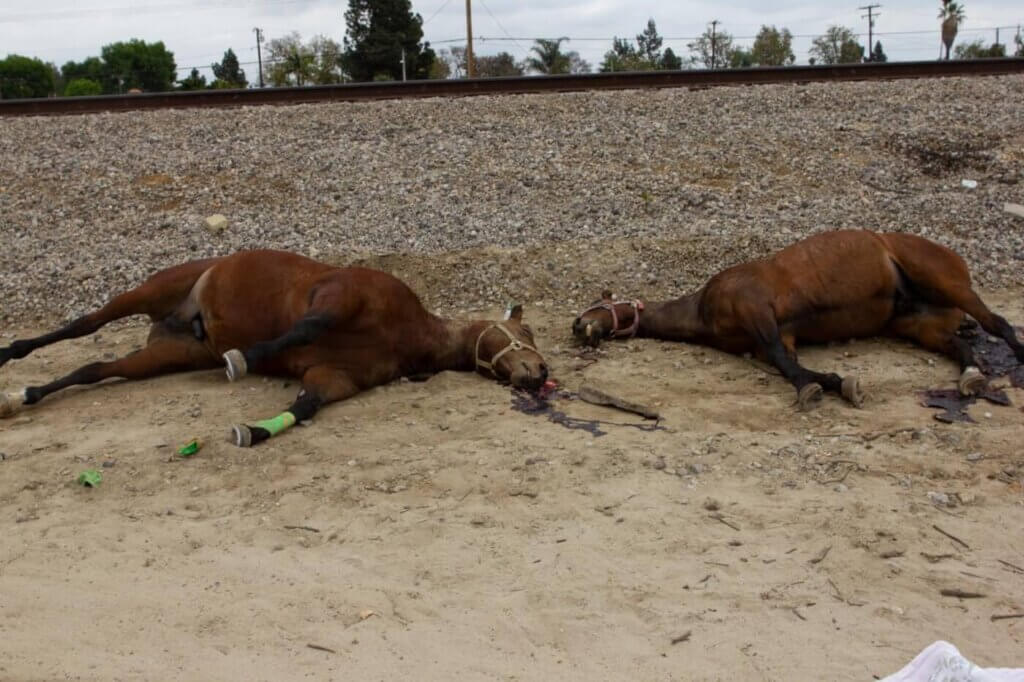 Dead horses found in San Gabriel Valley