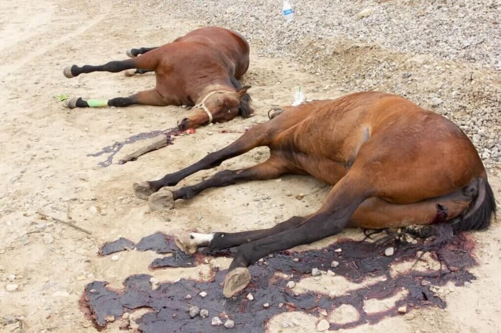 Dead horses found on bike trail