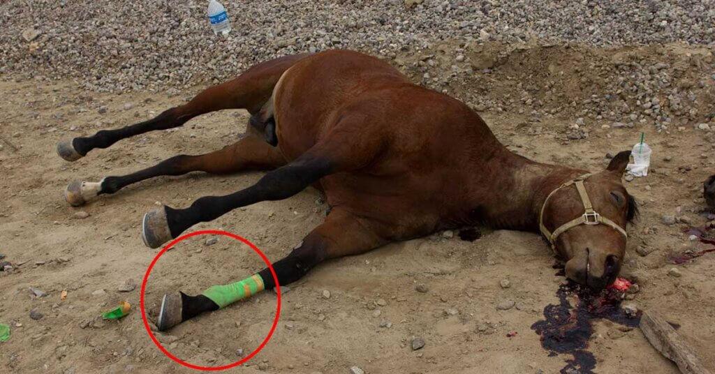 Leg wrap on dead horse found on bike trail