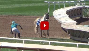 DE ÚLTIMO MOMENTO: Un caballo acaba de morir en el hipódromo de Santa Anita.
