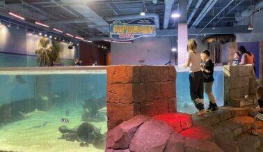 PETA Insta a los Visitantes de Las Vegas a Mantenerse Alejados del Acuario SeaQuest