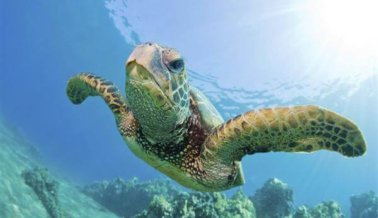 Dos hombres 'surfeando' sobre una tortuga desataron la ira en Internet