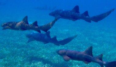 Restaurante cobra a turistas por tomarse selfis con este tiburón cautivo