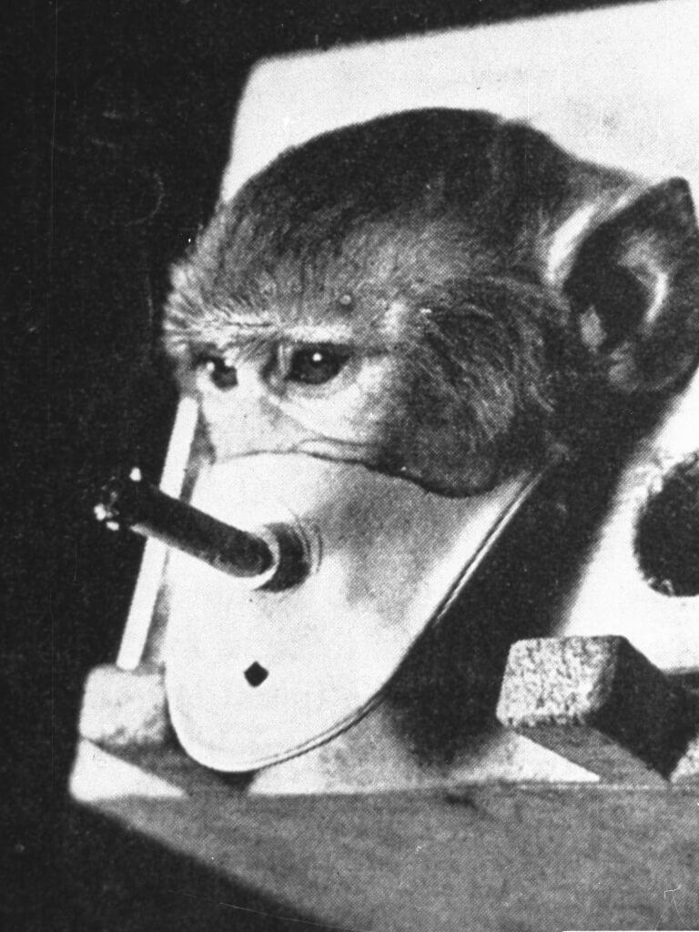 smoking-monkey-experiments