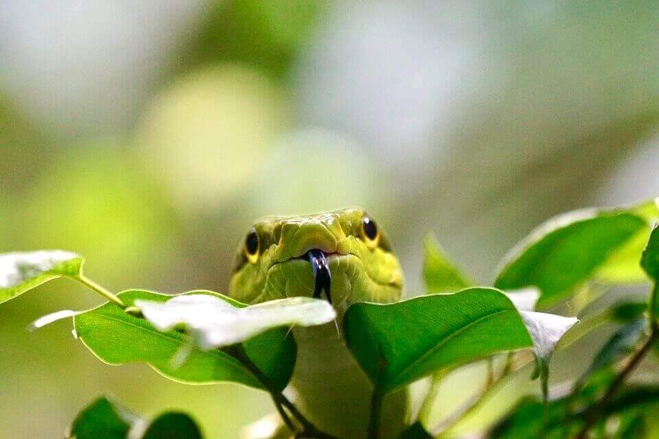 serpiente en la naturaleza