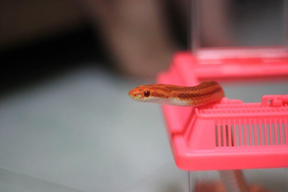 serpiente en contener de plastico