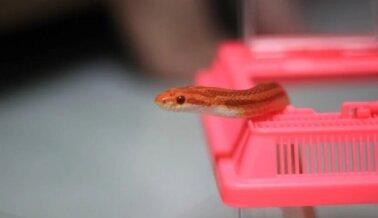 Aquí Te Decimos Por Qué Comprar Serpientes u Otros Reptiles Es un Grave Error