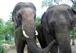 Sunder in His New Home