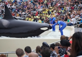 Nothing to Celebrate: It's Business as Usual at SeaWorld