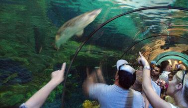 Por qué los tanques de SeaWorld son un infierno para los tiburones