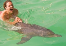Dolphin Who Battled Cancer Still Forced to Entertain Tourists
