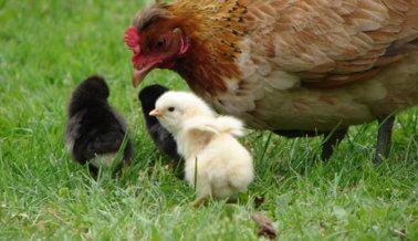 ¡11 fotos adorables de bebés con sus mamás!