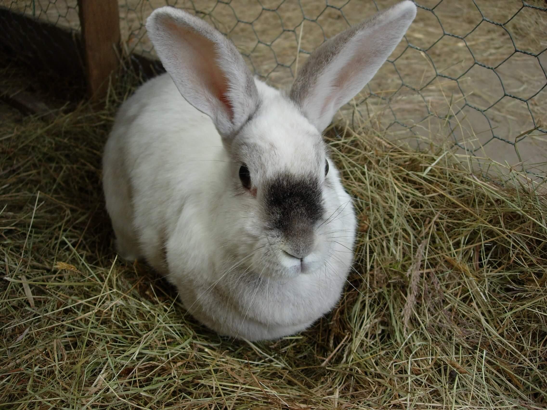 sxc bunny 786082