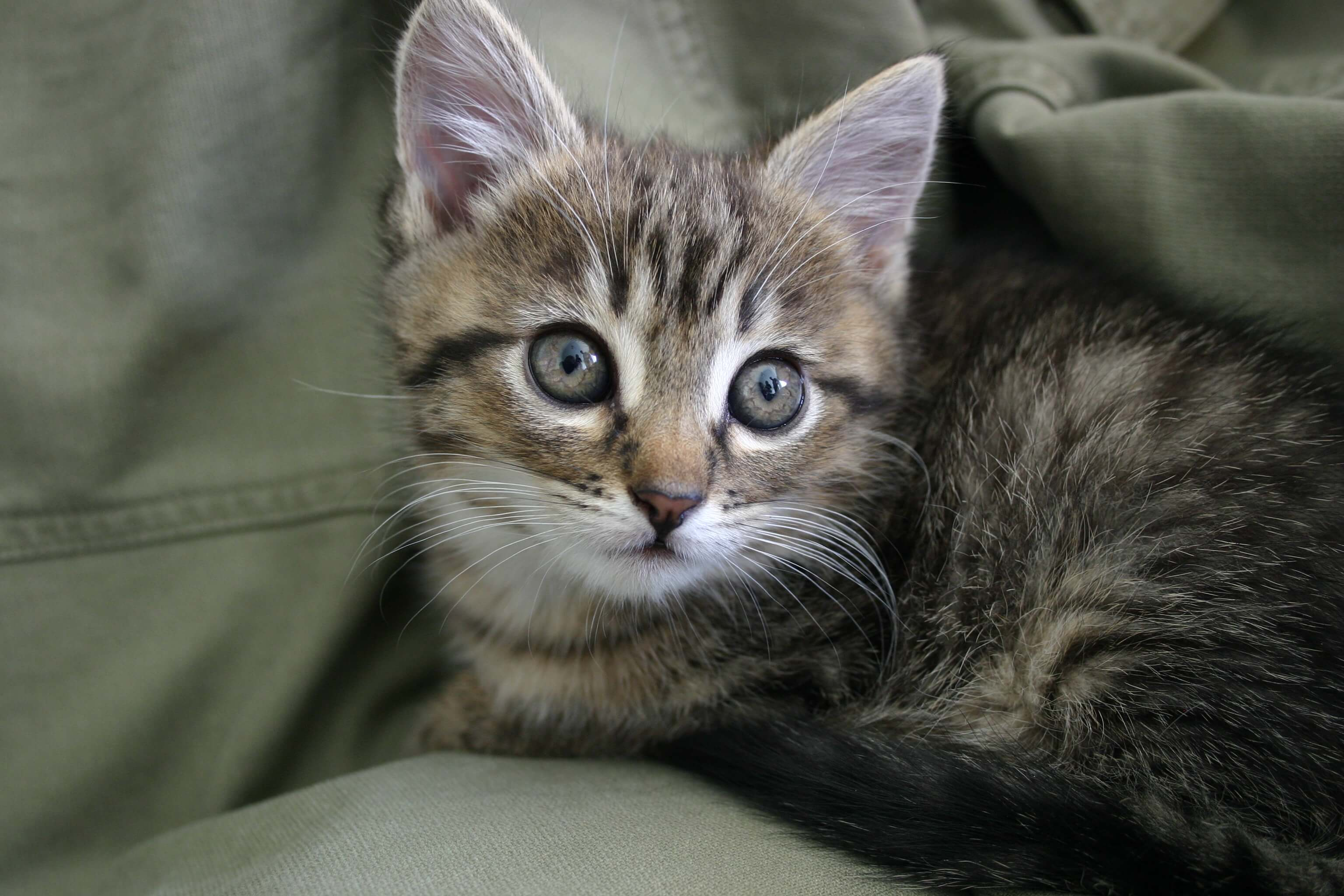 sxc cute kitten 628455
