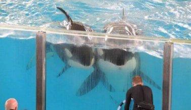 ¿Te molestó lo que viste en SeaWorld? Pide un rembolso