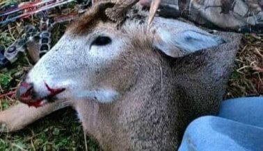 Era de esperarse, el tirador de Las Vegas tenía un historial de violencia hacia los animales