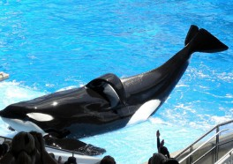 Ten Things You Didn't Know About SeaWorld