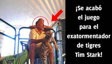 ¡Se acabó el juego para el exatormentador de tigres Tim Stark!