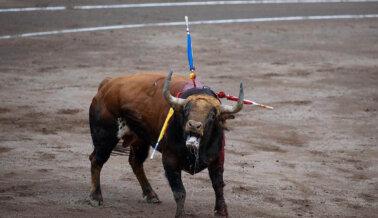 San Fermín No Merece Mentes Sádicas Sedientas de Sangre