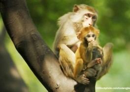 Victory! United Airlines Stops All Shipments of Primates to Laboratories