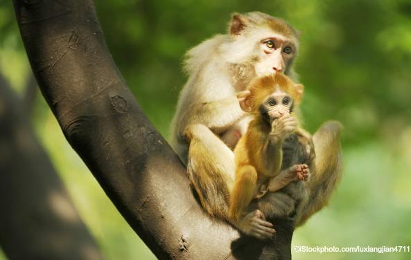 united-primates