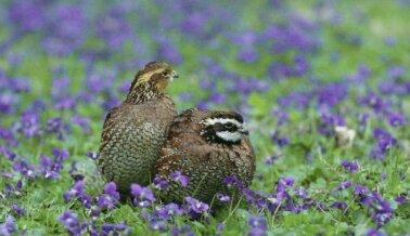 ¡Victoria! Los Científicos de PETA y EPA Salvan a Cientos de Aves