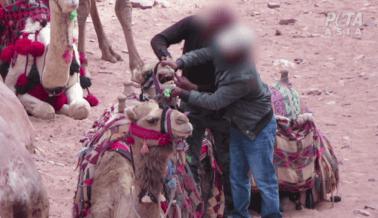 Nuevo video revela que los animales siguen siendo golpeados en Petra