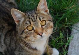Victory! Washington University Stops Tormenting Cats Amid PETA Pressure