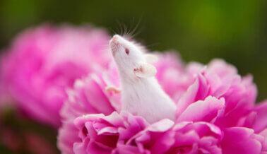 ¡Momento histórico para los animales! El Parlamento Europeo Vota SÍ al Plan Para Poner fin a los Crueles Experimentos