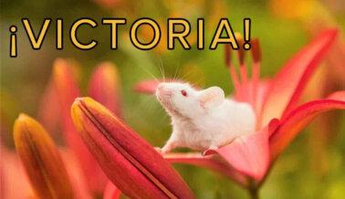 ¡Victoria en Taiwán! El grupo Vitalon Foods no Hará más Pruebas en Animales tras ser Contactado por PETA