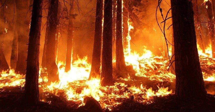 Ley de California Protege a los Incendiarios Forestales de Cargos por Crueldad Animal