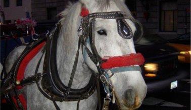 ¡Victoria! San Juan prohíbe los carruajes tirados por caballos