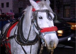Horse Collapses in Busy Hell's Kitchen Intersection