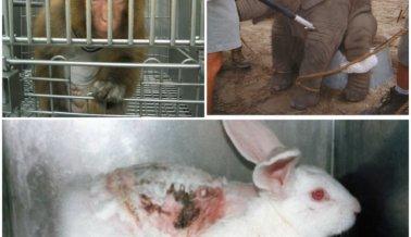 Las 6 peores empresas para los animales