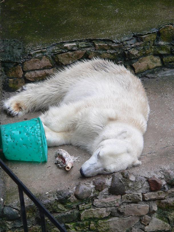 zoo-polar-bear-captivity